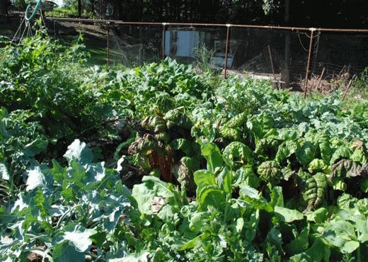 close-up-garden-2012.