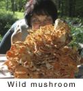 mushroomcap.jpg