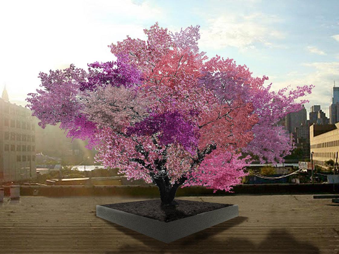 Aken - grafted tree